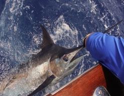 pesca-punta-cana-pedrito